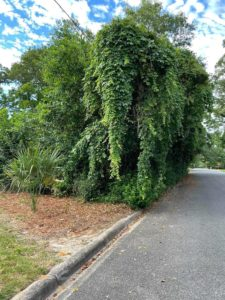 Vine-covered trees strongly resembling an elephant